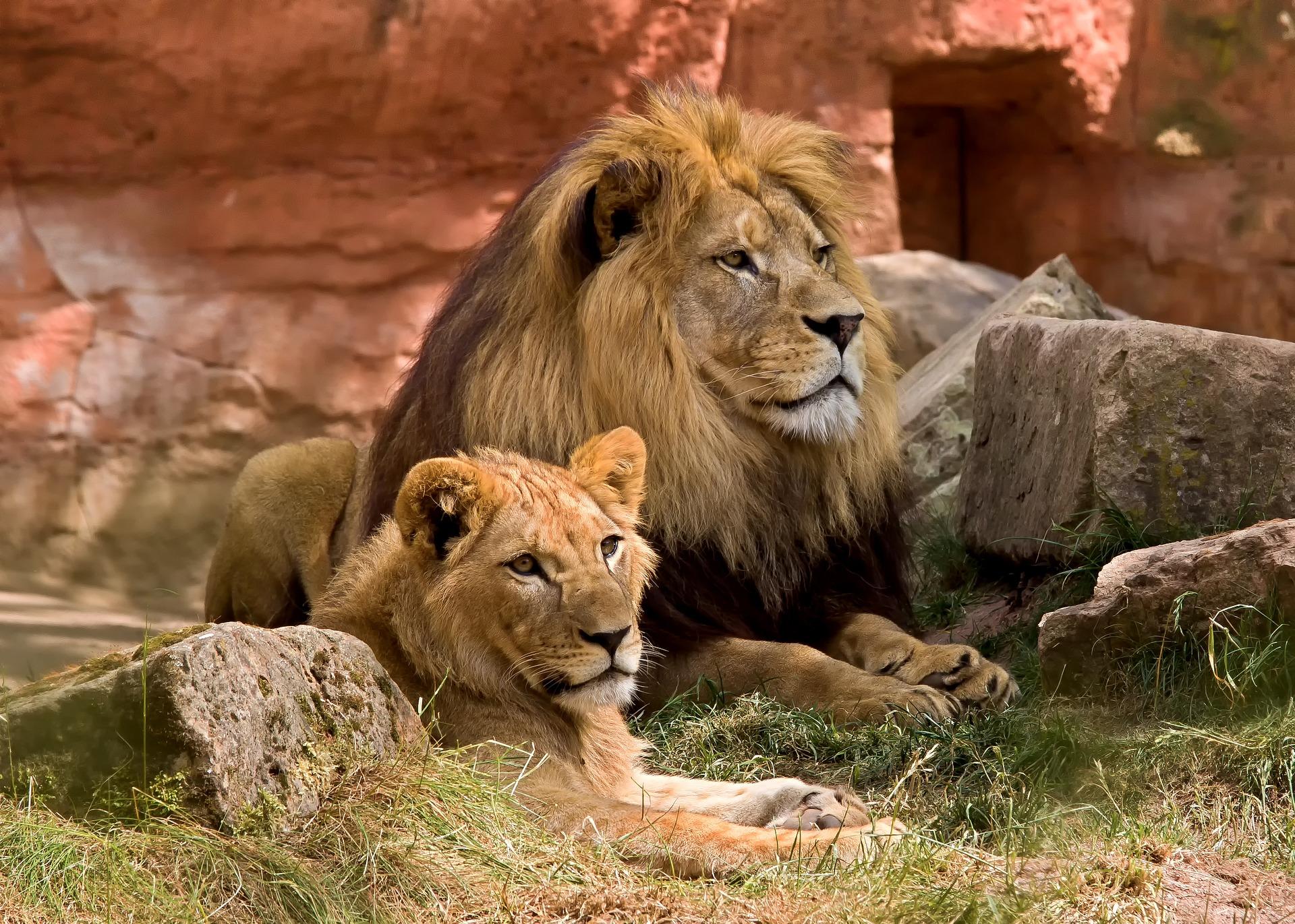 Скачать Обои Львов